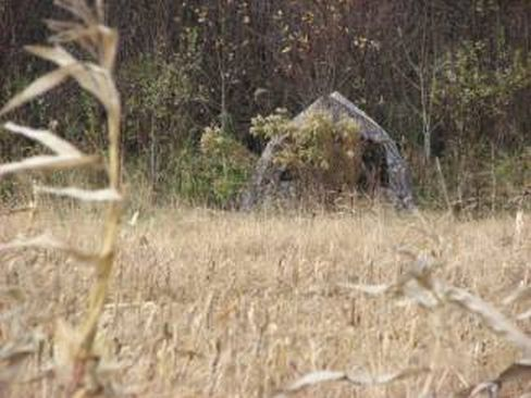 Ground blind for Deer