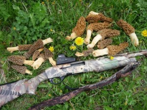 Late season Turkey allows you to find other goodies as well, Morel Mushroooms!