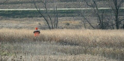 Basic Pheasant Hunting