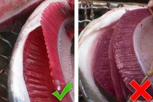 The gills of fresh fish