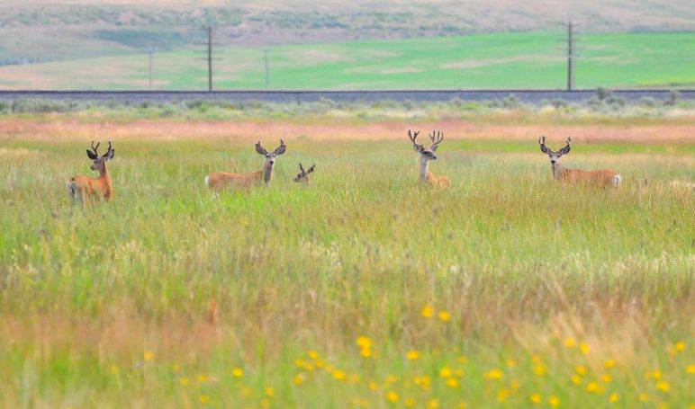 Environmental Land purchase