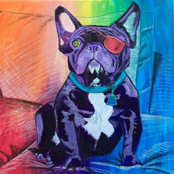 French Bulldog with eye patch