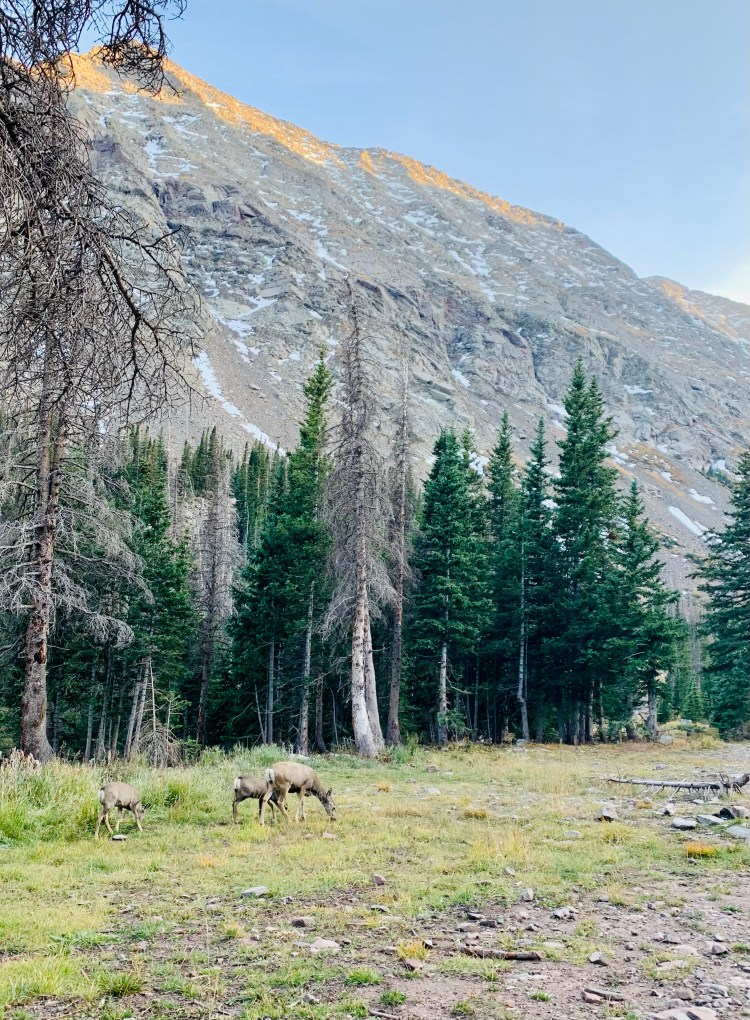 deer grazing in South Colony Basin