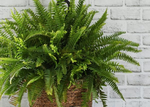 Plants That Can Absorb Heat & Cool Homes