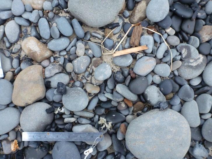 A few snail eggs but an otherwise clean drift line