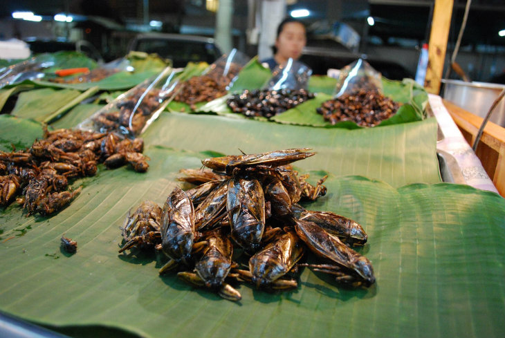 LL_80Insects-in-market