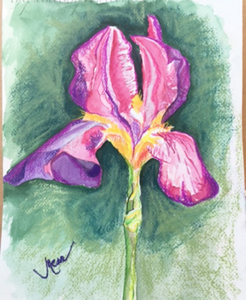 watercolor and pastel iris