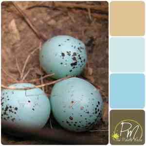Robin Eggs Palette