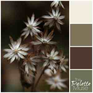Outdoor-Palette