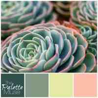 Sunny Succulent Palette