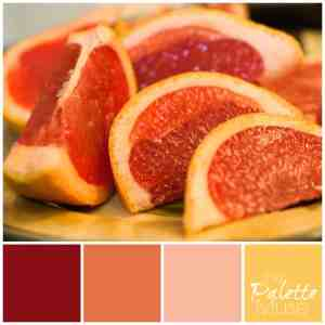 Grapefruit Palette