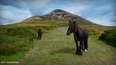 Discovering The Emerald Isle | ©Tom Palladio Images