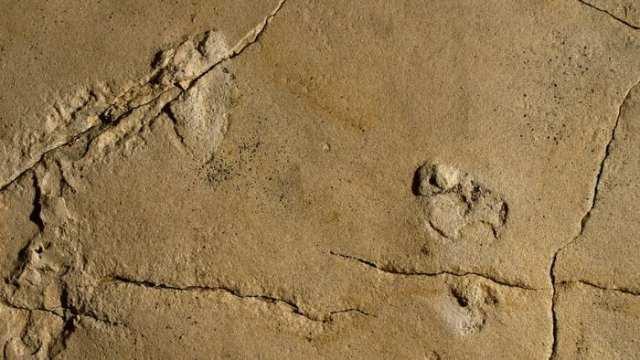 Ape foot