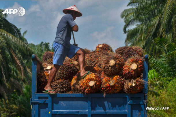 palm oil price effect to workers