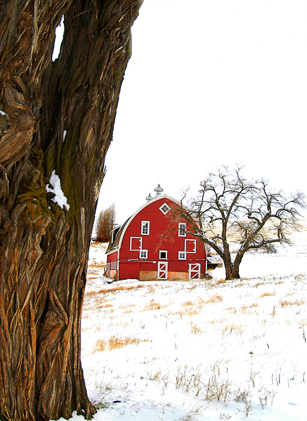 Winn Road Barn in Snow 1 by Gary Hamburgh - All Rights Reserved