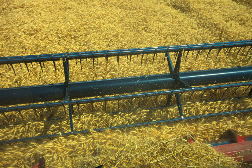 View from a Combine - Copyright Gary Hamburgh - All Rights Reserved