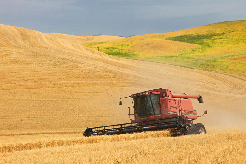 Combine at Work - Copyright Gary Hamburgh 2009 - All Rights Reserved