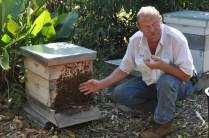 """Earl, my friend who collects swarms. """"Look, I'm so comfortable around bees that i can put my bare hand right on the front of the hive…. OWW!"""""""