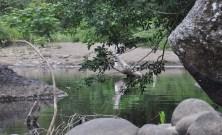 river2_28a