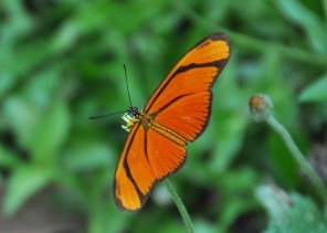 I don't think I've seen one of these beautiful orange butterflies in our yard before.