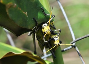 How about two grasshoppers? They almost look like they are smiling.