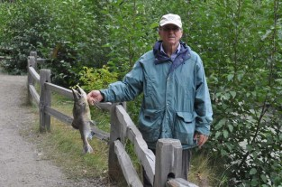 Many of the fish were exhausted and easy to catch with bare hands, or a stick as Joel demonstrates.