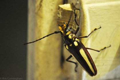 This really interesting and fairly large bug was on the gate to the patio.
