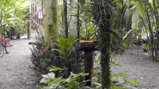 There are a number of bird feeders around, they also have tiki torches that can be lit at night.