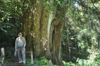 There were some magnificent trees. Look at the huge trunk of this one!