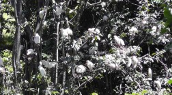 One day i found this nesting area full of egrets.