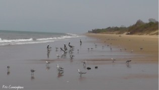 The seagulls and pelicans hang out on the beach