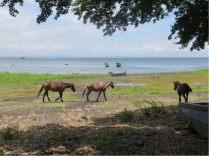 Horses by the water always make a pretty picture