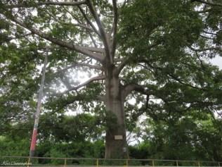 An amazing tree we passed.