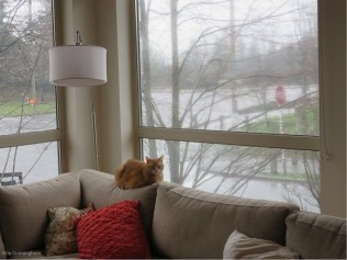 Maple takes up her day position to watch the state of the world outside.