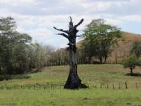 Interesting old tree