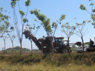These machines were picking the sugar cane.