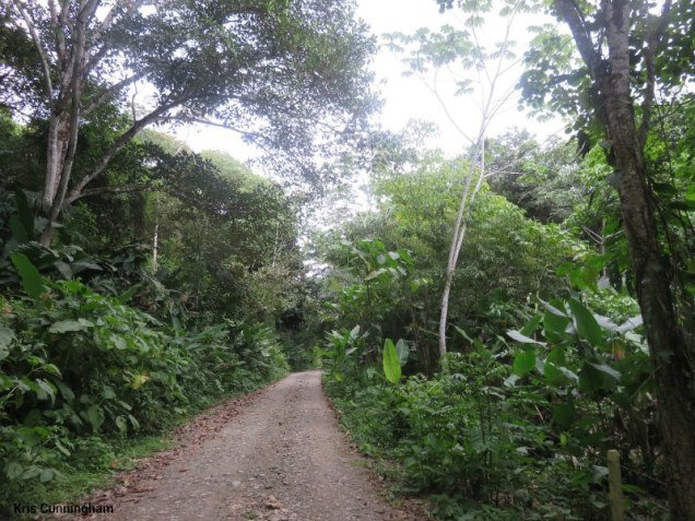 the road to the beach.