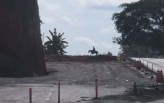 A very lucky shot of a guy on his horse crossing the highway.