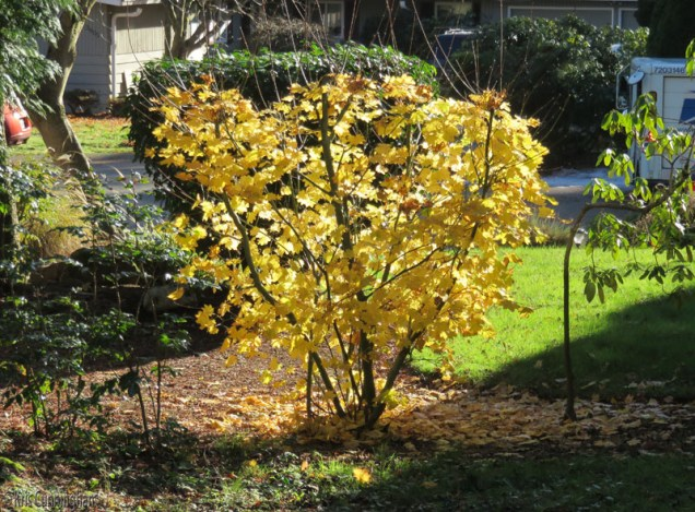 But, there are also beautiful fall colors in the sunshine