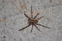 another interesting spider