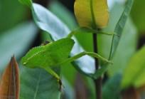 Interesting, slow moving green bug