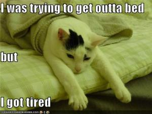lolcat i was trying to get outta bed but i got tired