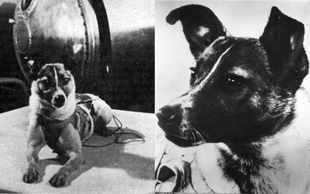 Photographs of Laika. A russian space dog.