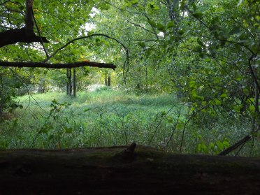 woods-with-log-in-foreground.jpg