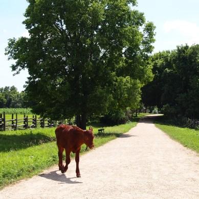 greeter calf