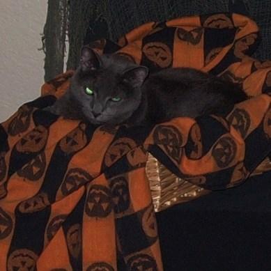 Halloween Cat by Renae Rude