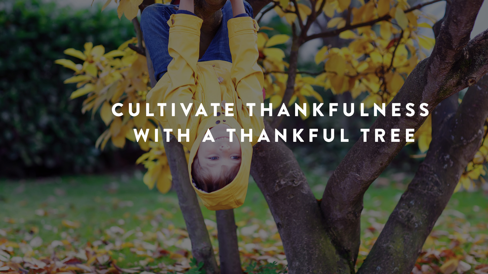 Cultivating Thankfulness with a thankful tree