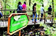 Lekki Conservation Centre: An Urban Jungle Leaving a life Time Experience
