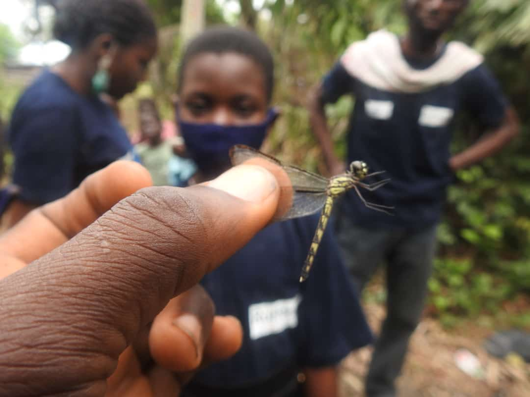 Youths Harps on Ecological Importance  of Dragonfly