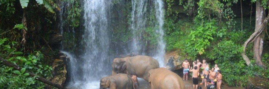 chiangmai elephants